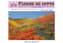 floare_de_lotus_nr5